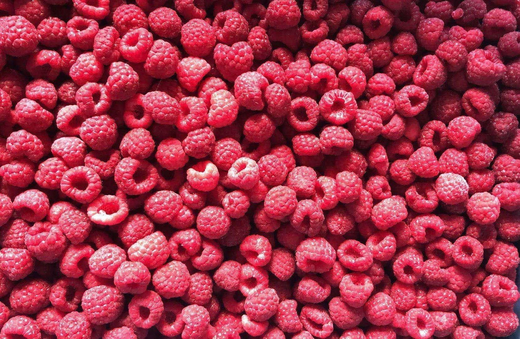IQF raspberries crumbles,Frozen raspberry crumbles,red,cultivated 19