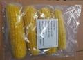 IQF Sweet Cob Corn,Frozen Sweet Corn on the COB,Frozen Cob Corn 10