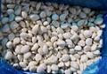 冷凍蒜瓣,冷凍蒜丁,冷凍蒜泥 16