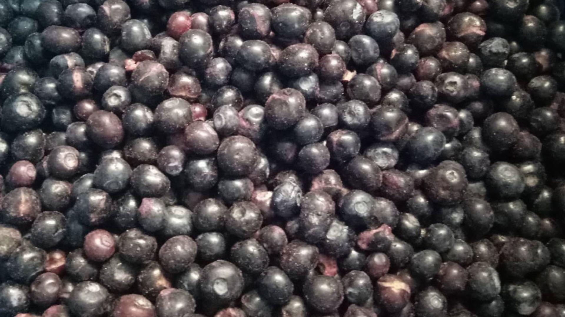 冷凍藍莓,速凍藍莓 10