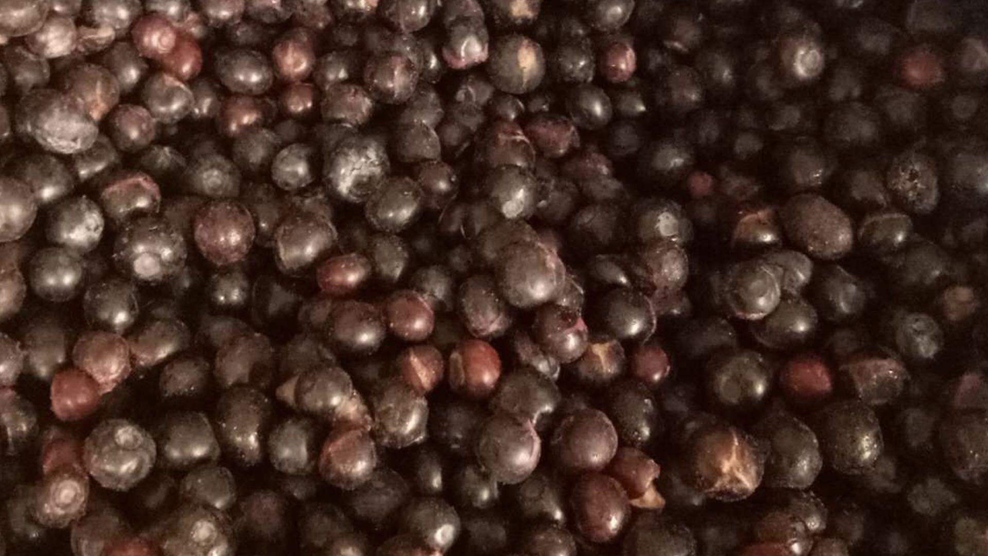 冷凍藍莓,速凍藍莓 12