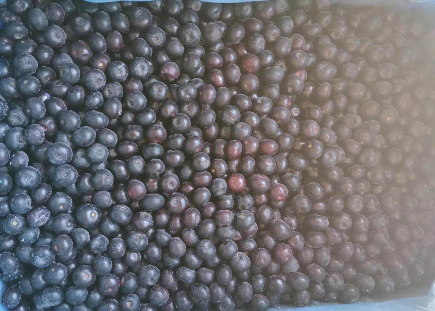 冷凍藍莓,速凍藍莓 1