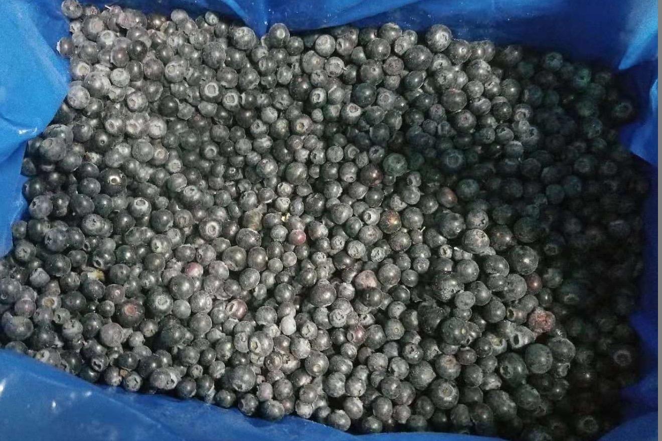 冷凍藍莓,速凍藍莓 3