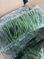 IQF Asparagus Beans ,Frozen Cowpeas,IQF Cowpeas,wholes/cuts 9