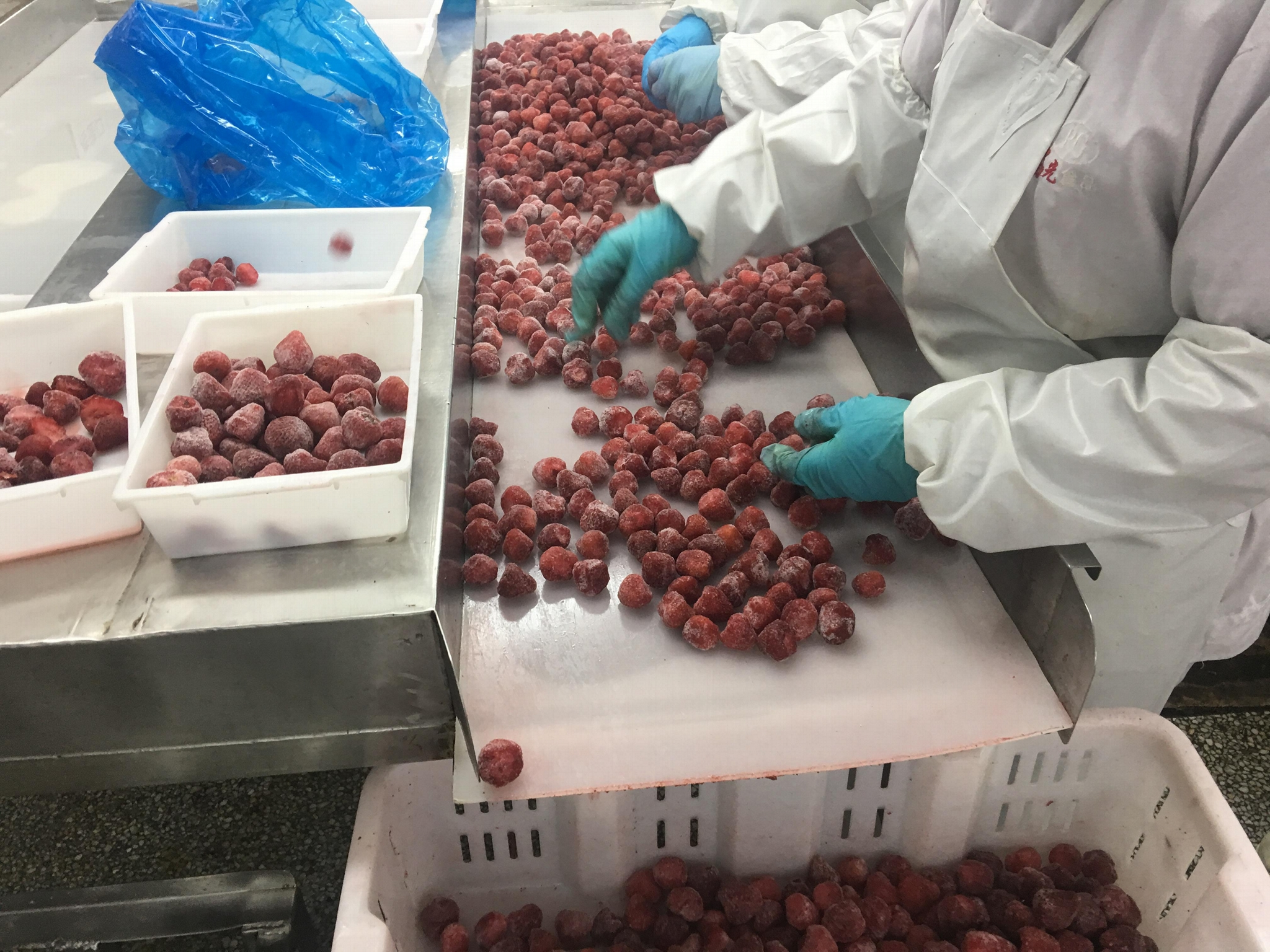 IQF Strawberries,Frozen Whole Strawberries,IQF Strawberry,American no.13 variety 8