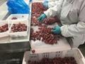 冷凍草莓,速凍草莓,冷凍草莓泥,速凍草莓泥 8