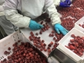 IQF Strawberries,Frozen Whole Strawberries,IQF Strawberry,American no.13 variety 9