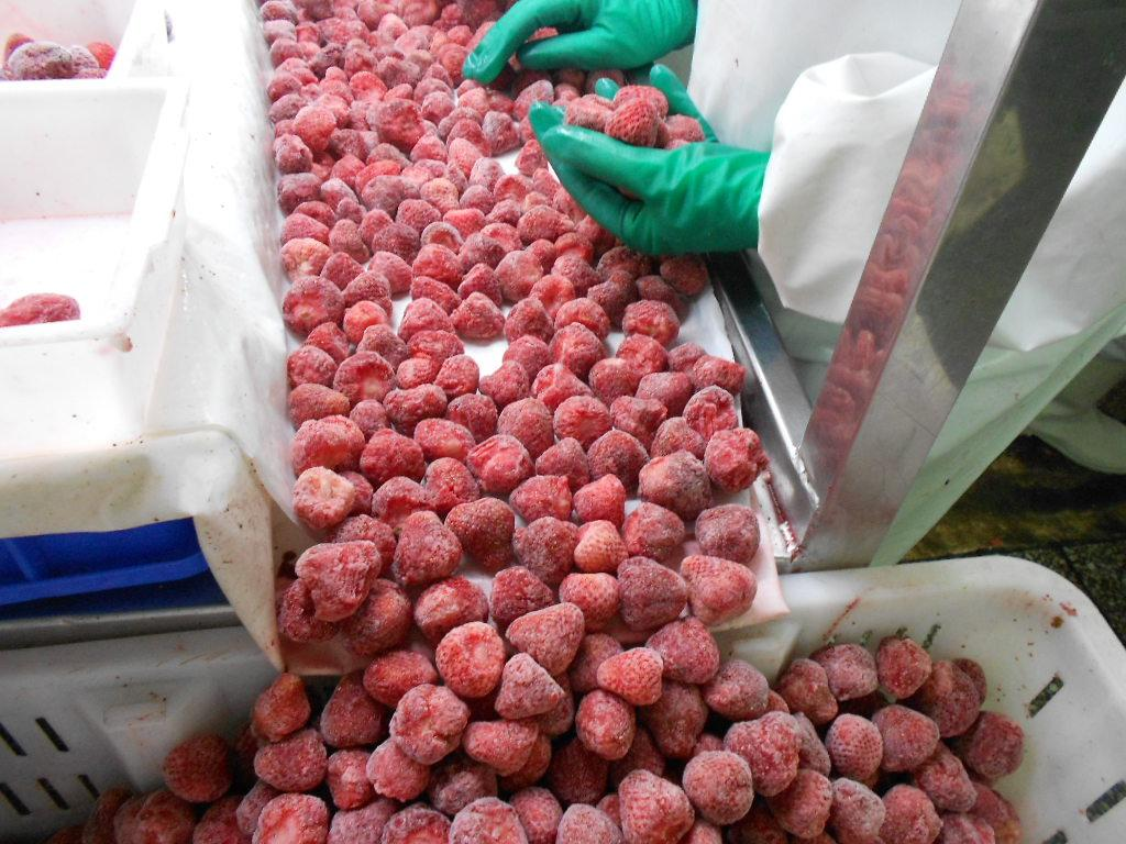 IQF Strawberries,Frozen Whole Strawberries,IQF Strawberry,American no.13 variety 12