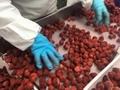 冷凍草莓,速凍草莓,冷凍草莓泥,速凍草莓泥 6