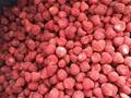 Frozen Strawberries,Frozen Strawberry,IQF Strawberries,Honey Variety 3