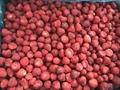 Frozen Strawberries,Frozen Strawberry,IQF Strawberries,Honey Variety 4