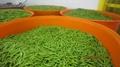 冷凍甜豌豆,速凍甜豌豆 9