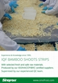 IQF bamboo shoot dices,Frozen bamboo shoot dices,IQF diced bamboo shoots