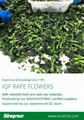 IQF Rape Flower,Frozen Rape Flowers,BQF Rape Flowers