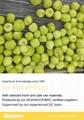 冷凍獼猴桃,速凍獼猴桃 9