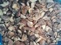 冷凍松菇塊,速凍松菇塊 9