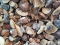 冷凍松菇塊,速凍松菇塊 10