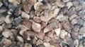 冷凍松菇塊,速凍松菇塊 11