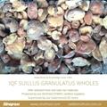 IQF Suillus Granulatus Wholes,IQF Suillus Granulatus Wholes,wild mushrooms