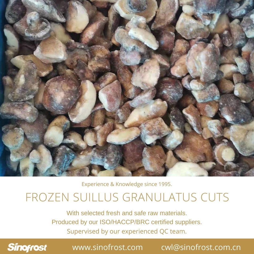 冷凍松菇塊,速凍松菇塊 14