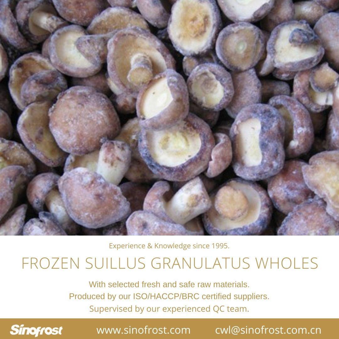 冷凍松菇塊,速凍松菇塊 15
