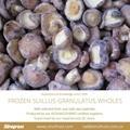 IQF Suillus Granulatus Cubes,Frozen Suillus Granulatus Cubes,wild mushrooms