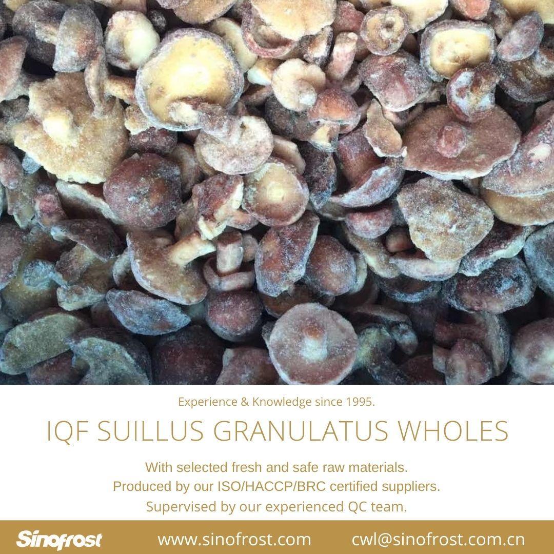 冷凍松菇塊,速凍松菇塊 16