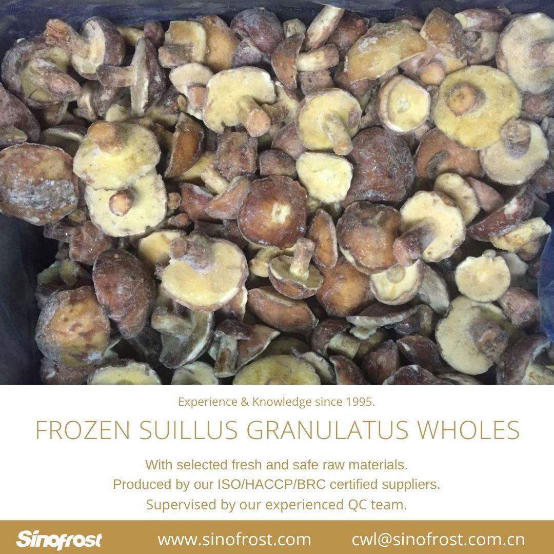 冷凍松菇塊,速凍松菇塊 17