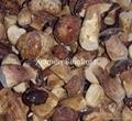 IQF Boletus Edulis Wholes,Frozen Boletus Edulis Wholes,IQF Wild Mushrooms