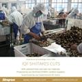IQF Shiitake Slices,Frozen Shiitake Slices,IQF Sliced Shiitakes