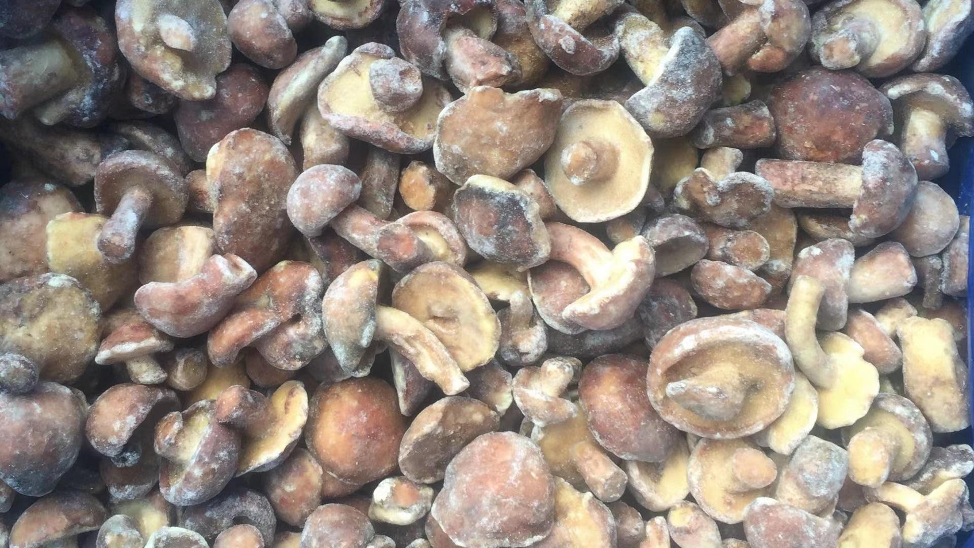 冷凍松菇塊,速凍松菇塊 8