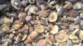 冷凍松菇塊,速凍松菇塊 5