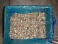 IQF Pleurotus Baby Wholes,Frozen Pleurotus Baby Wholes,Frozen Oyster Mushrooms
