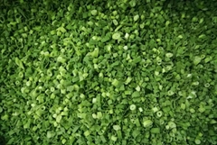 IQF Spring Onion Slices,IQF Green Onions Dices,Frozen Green Onion Cuts