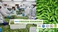 IQF Mukimame,IQF Shelled Edamame,IQF Green Soybean Kernerls