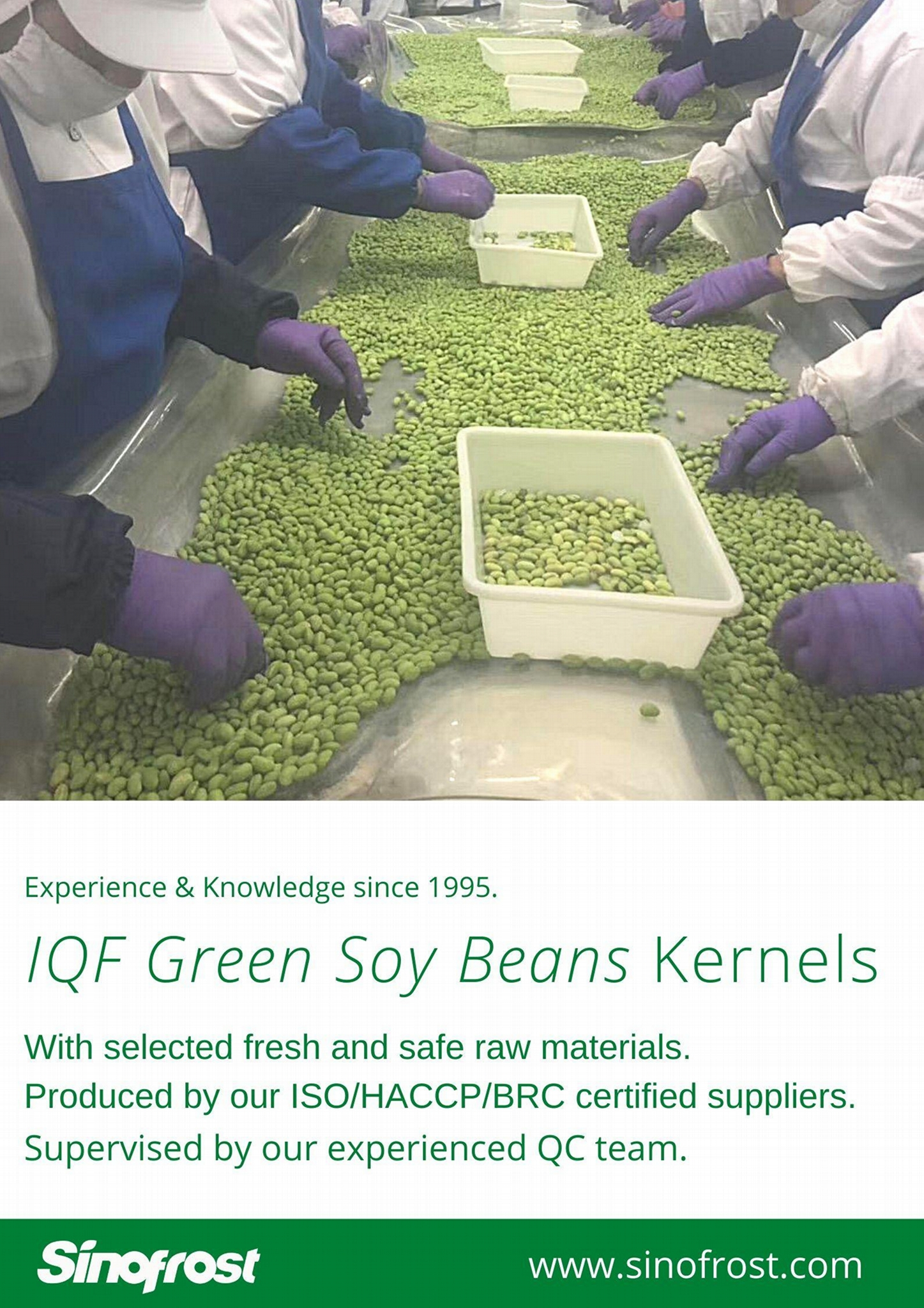 IQF Edamame,Frozen Edamame,IQF Green Soy Beans,Frozen Green Soy Beans 19
