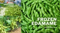 IQF Edamame,Frozen Edamame,IQF Green Soy Beans,Frozen Green Soy Beans 2
