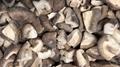 IQF Mixed Mushrooms,Frozen Mixed Mushrooms,Mushrooms Blend,Wild Mushrooms Blend 10