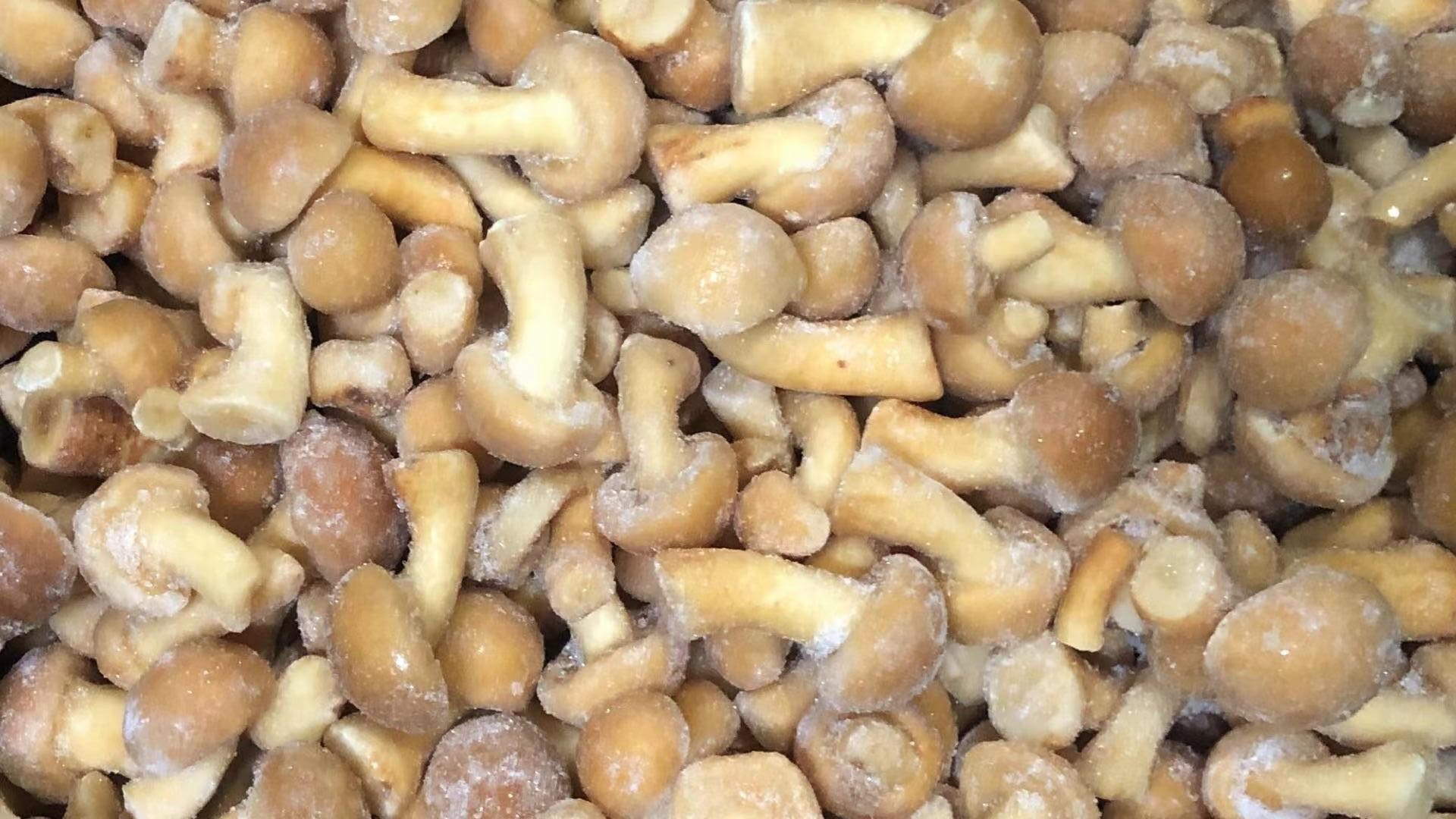 IQF Mixed Mushrooms,Frozen Mixed Mushrooms,Mushrooms Blend,Wild Mushrooms Blend 12