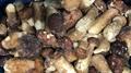 IQF Mixed Mushrooms,Frozen Mixed Mushrooms,Mushrooms Blend,Wild Mushrooms Blend 18