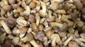 冷凍滑仔菇,速凍滑仔菇 8