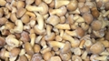 IQF nameko ,Frozen Nameko,IQF Mixed Mushrooms,Frozen Mixed Mushrooms