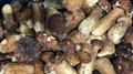 冷冻滑仔菇,速冻滑仔菇