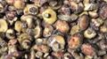 冷凍滑仔菇,速凍滑仔菇 17
