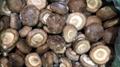 冷凍香菇,速凍香菇 20