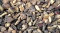 冷凍松菇塊,速凍松菇塊 3