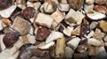 IQF Boletus Edulis Cubes,Frozen Boletus Edulis Cuts,Frozen Wild Mushrooms