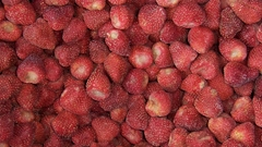 IQF Whole Strawberry,Frozen Strawberry Wholes,IQF strawberries,Darselect variety