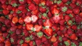 IQF Strawberries,Frozen Whole Strawberries,IQF Strawberry,American no.13 variety 6