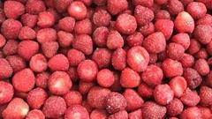 Frozen Strawberries,Frozen Strawberry,IQF Strawberries,Honey Variety